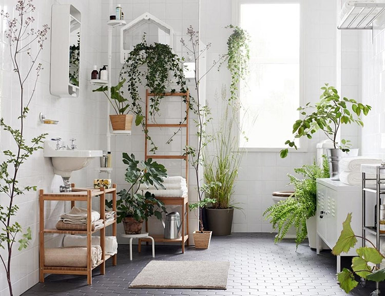 Trồng cây trong nhà giúp căn hộ thêm thoáng đãng, gần gũi với thiên nhiên