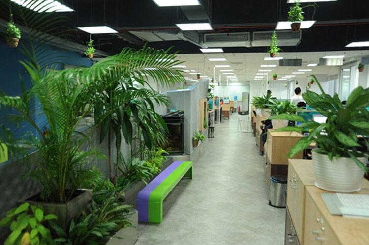 Nguyên tắc thiết kế này yêu cầu bạn cần cung cấp cho văn phòng mình sự thiên nhiên.